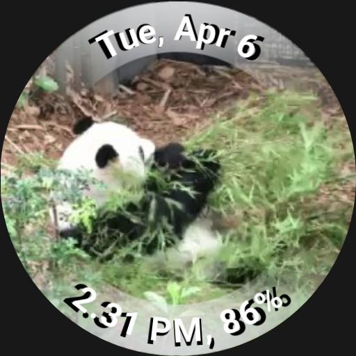 Panda GIF