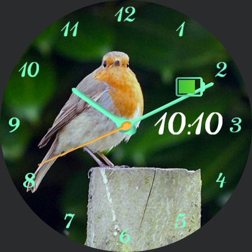 Robin Watch