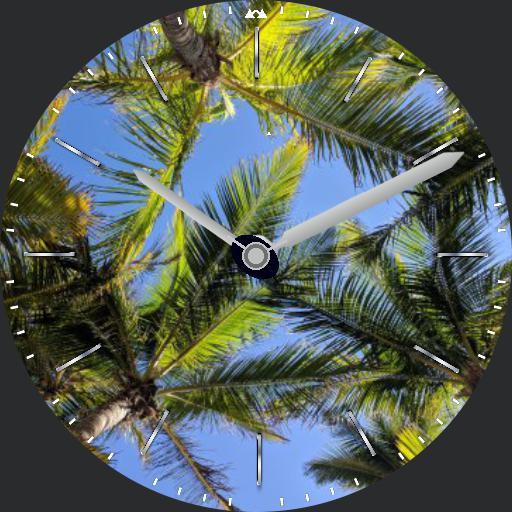 onze palmbomen