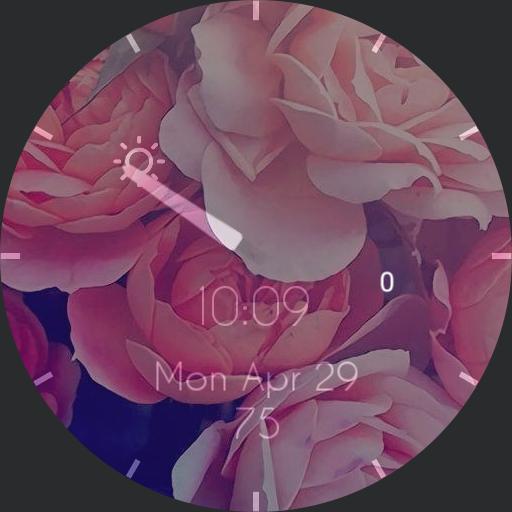 my fair roses Copy