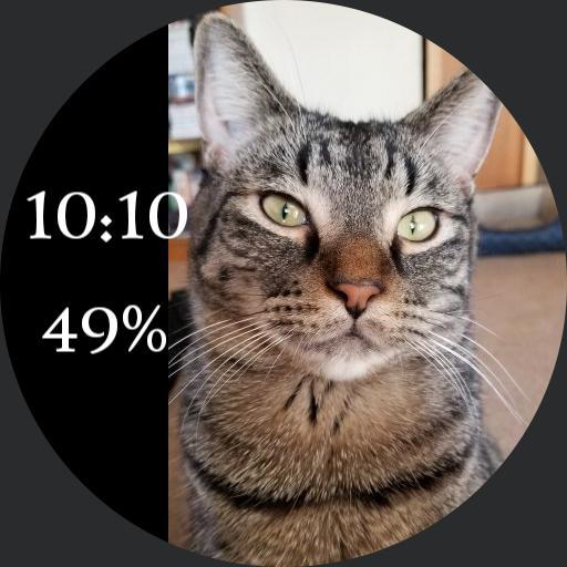 tabby cat cass