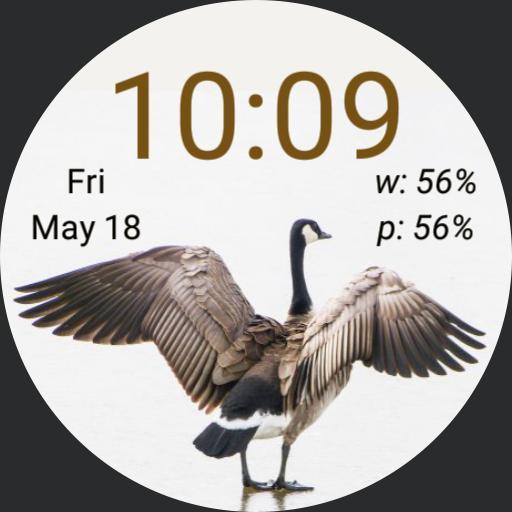 cjb goose