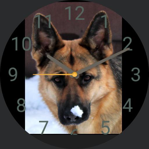 sheperd dog Anja