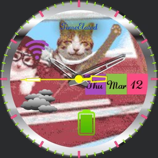 Friendly cat pilot