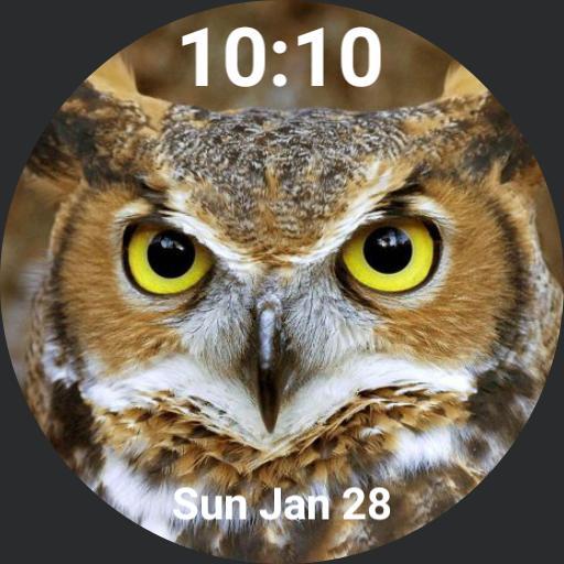 OwlFace Copy