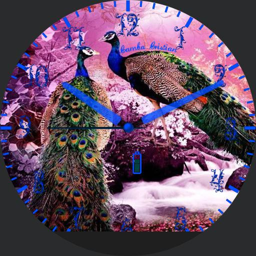 Peacock Lucy 2