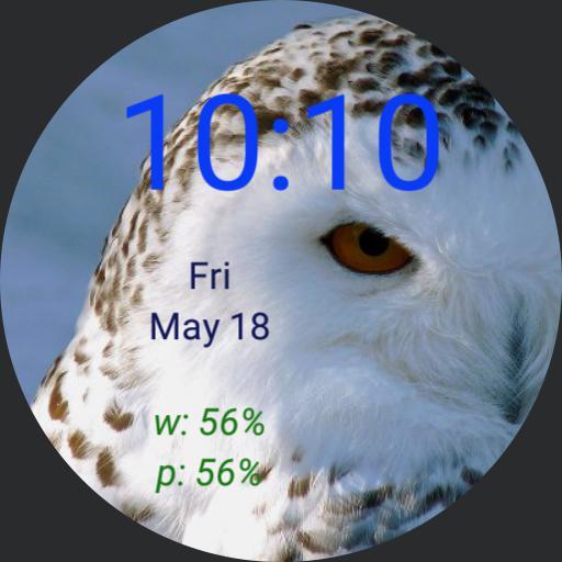 cjb snowy owl