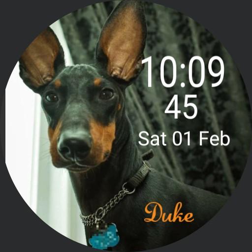 Manchester Terrier Duke