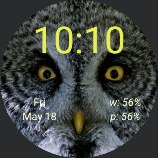 cjb great gray owl