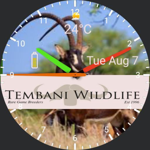 Tembani Watch