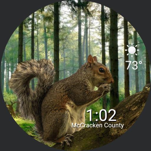 chill squirrel