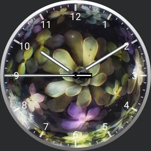 crystal succulents