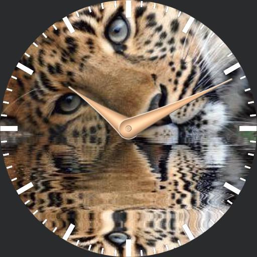 leopard3 animated plwren