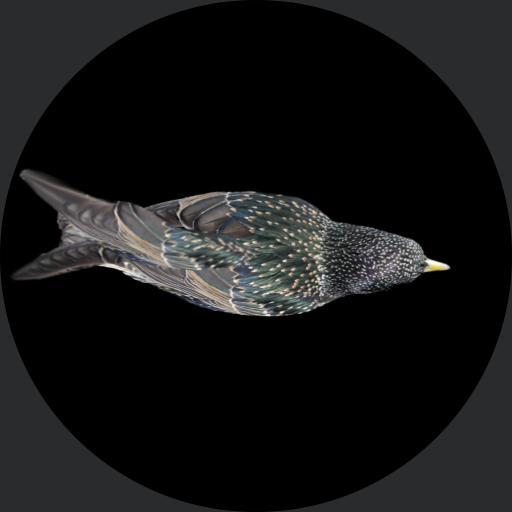 bird test