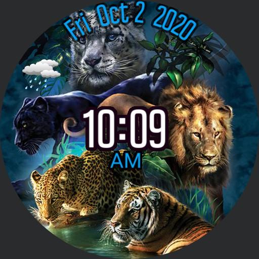 Lions by Bob