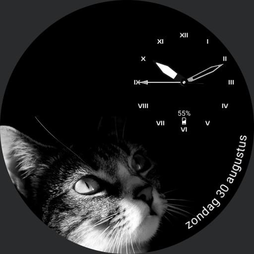 Starring Cat