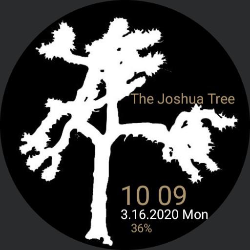 Joshua Tree White