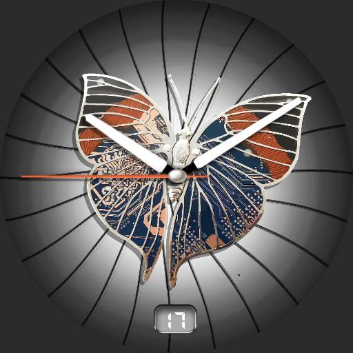 Butterfly Zoom