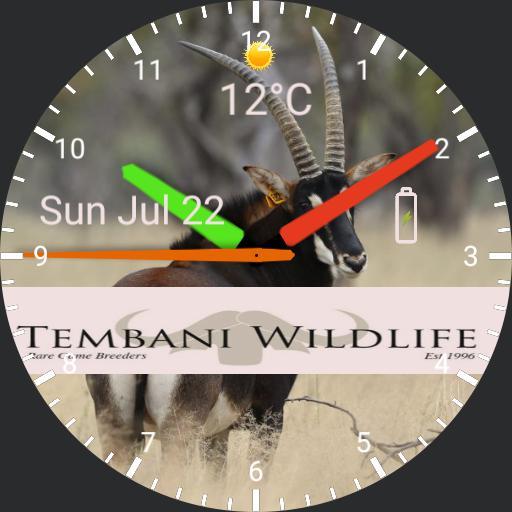 Variani Watch