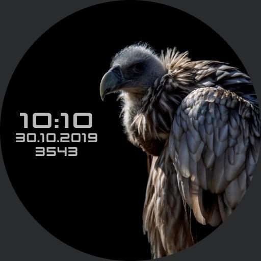 MEDVED.evg Animal 02