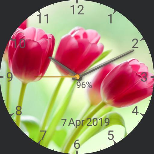Dodi,  tulips