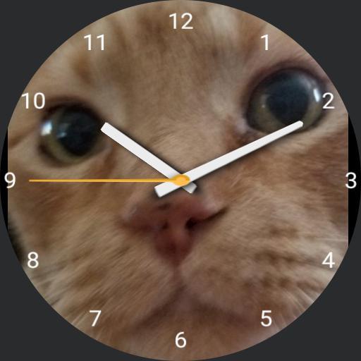 JoeCat Watch