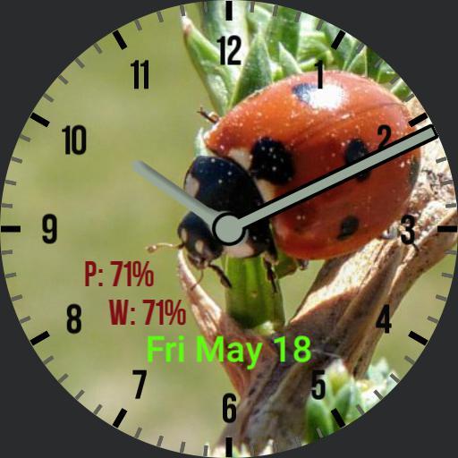 cjb Ladybug analog