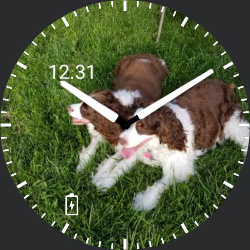 Springer-Time