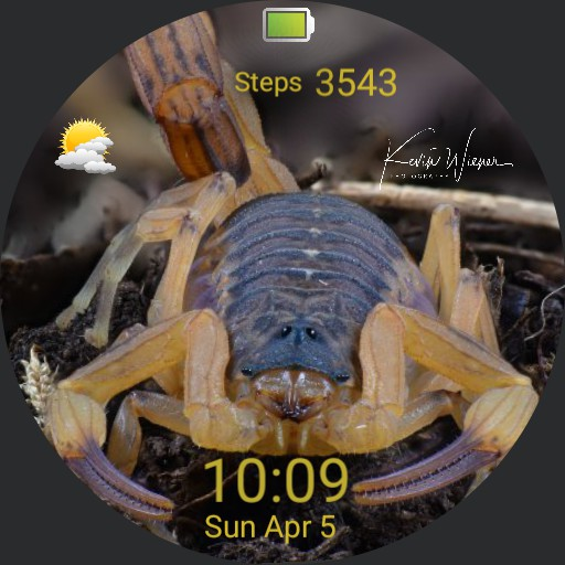 Brazilian Yellow Scorpion Copy
