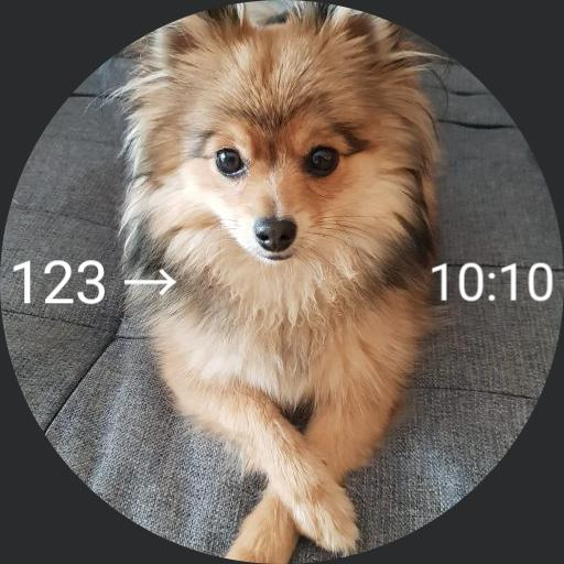dog glucose