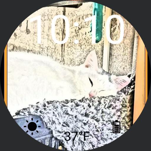 Spot white cat