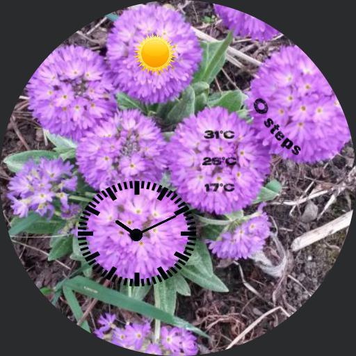 _blumal violett