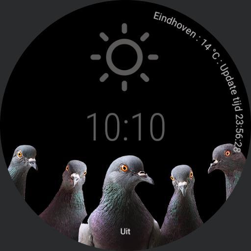 dRobje is nog steeds geen fan van duiven