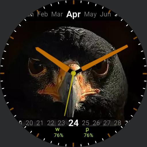 My Eagle 1.00