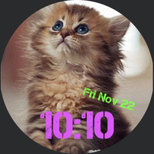 A kitten plea