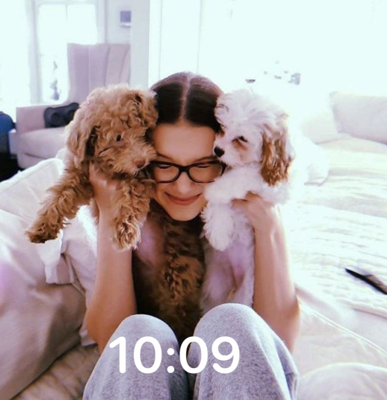 Milli and dogs
