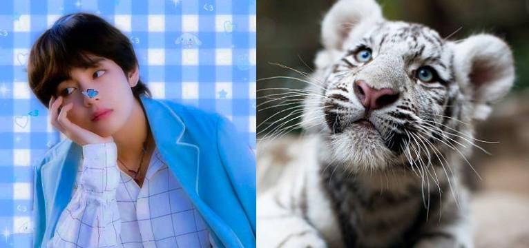 tae tiger