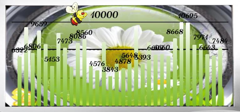 Schritte Flower Time