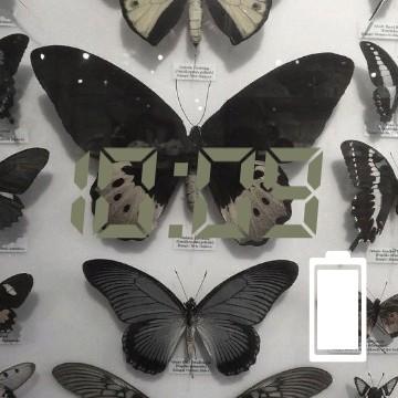 buterfly 1.2
