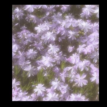 light purple cottage core