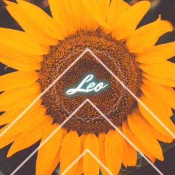 Leo sunflower