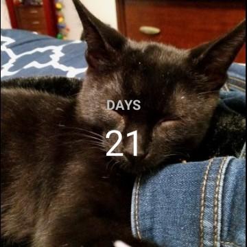 countdown cat widget