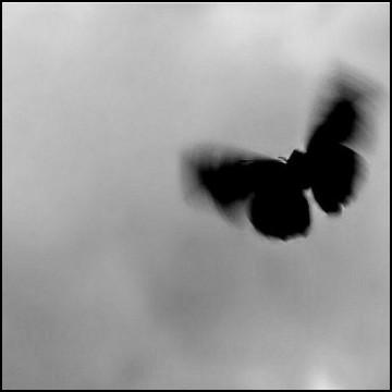 butterfly widget
