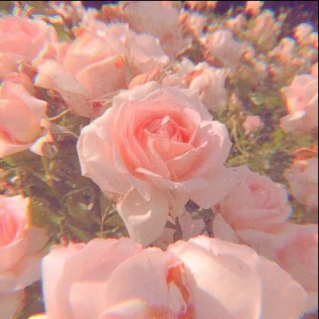 asthetic pink