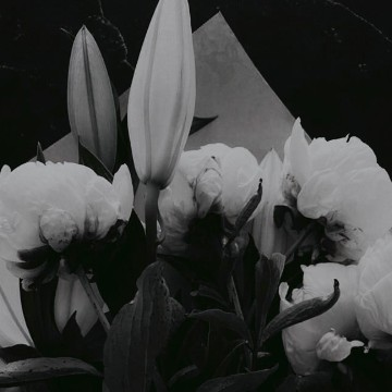 Flores, black
