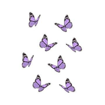 butterfly1 ;